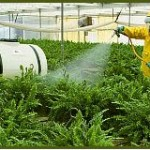 GReenhouse Pesticide